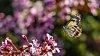 -butterfly_1400_77_imgp1629.jpg