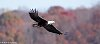 -eagle-fall-colors.jpg