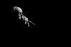 -harmonica-sigmund-groven.jpg