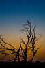 -magpie-sundown.jpg