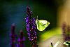 -backlit-butterfly.jpg
