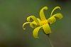 -curled-yellow-green.jpg