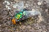 -colourful-fly.jpg