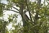 -mocking-bird-028.jpg