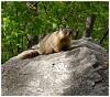 -columbiangroundsquirrel.jpg