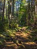 -monhegan-forest-rippling-shadows-2-9.16.jpg