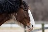-horse-head.jpg
