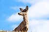 -deer-clouds.jpg