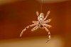 -spider-13.jpg