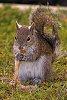 -squirrel-2.jpg