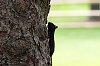 -black-squirrel-3.jpg
