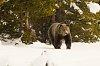 -yellowstone-04-29-2117-bear-2.jpg