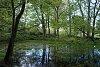 -marshlands-pond-17.05.14.jpg