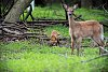 -kit-stalking-deer-2.jpg