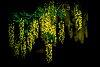-natures-chandelier.jpg