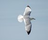 -bird-flight-1.jpg