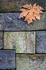 -autumn-leaf-1.jpg