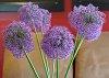 -flowercut-rikenon50mm061517.jpg