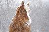 -horse22fb.jpg