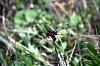 -red-dragonfly2695.jpg