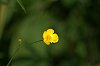 -tiny_yellow_flower071617.jpg