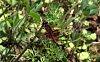 -love-you-dragonfly-1_smallcrop.jpg