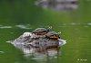 -turtle1anfb.jpg