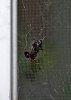 -sill-spider-2017-.jpg