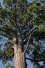 -big-pine-lg-0440.jpg
