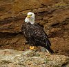 -eagle6anbs.jpg