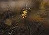 -spider01r.jpg
