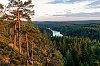 -trees_video.jpg