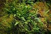 -lush-green.jpg
