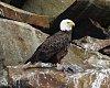 -eagle5fb.jpg