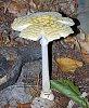 -mushroom-1.jpg