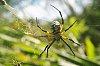 -spider.jpg