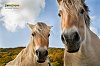 -horse7fb.jpg