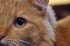 -cats-eye-1.jpg