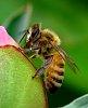 -bee-4.jpg