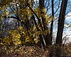 -edith-read-yellow-leaves.jpg