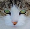 -closeup-cat.jpg