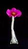 -pink-w-bud-vase.jpg
