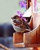 -fledgling-sparrow.jpg