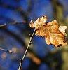 -winter-leaf.jpg