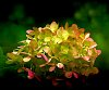 -green-yellow-pompoms.jpg