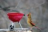 -cardinal-weber-pf-contest.jpg