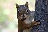 -squirrel1.jpg