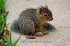 -baby-squirrel.jpg