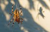 -2015-spider-shadow.jpg