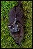 -gray-kitty-one-send-final-best-jpg.jpg